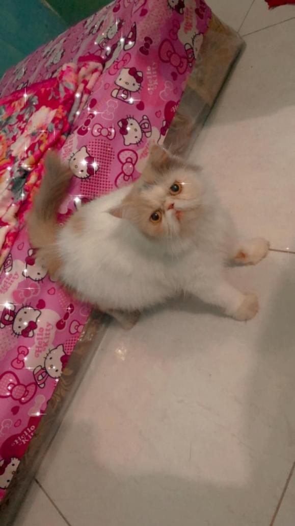 Salon kucing di Palangkaraya (1)