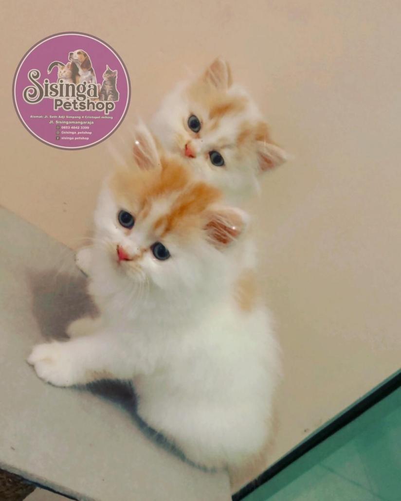 anti jamur kucing Palangkaraya