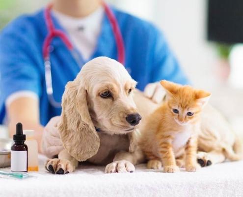 suntik jamur kucing dan anjing Palangkaraya