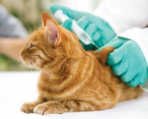 vaksinasi kucing di Palangkaraya